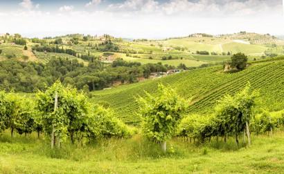 2014_07_18_Toskana_049_Panorama_2_von_2.jpg